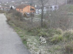 Uno dei due cani uccisi a Sant'Angelo Le Fratte