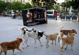 Cani randagi: a Buccino sfiorata la tragedia