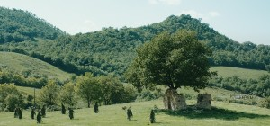 frame_alberi3