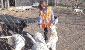 La volontaria insieme ai cani