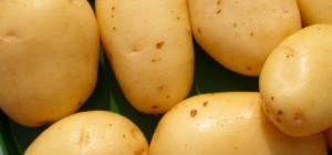 patate-1508x706_c