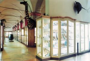 MuseiCivici1