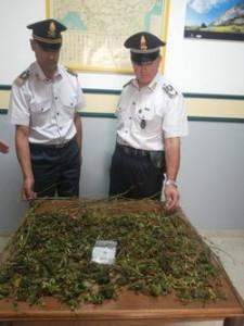 La marijuana sequestrata a Savoia di L.