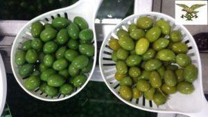 olive verdi askanews-2